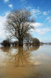 Landscape during the flood. The trees in the water during flood season of the Czech landscape royalty free stock photos