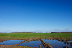 Landscape with a flooded fields Royalty Free Stock Photo