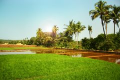 Landscape with flooded rice fields Stock Image
