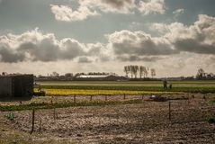 Landscape of the flower fields with father and son working in th royalty free stock images