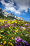 Landscape of flower filed on the piedmont of Lovcen mountain Stock Image