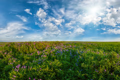 Landscape with flower meadow Royalty Free Stock Photo