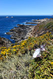 Landscape with flower and Pacific Ocean at Garrapata State Park Royalty Free Stock Photography