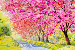 Landscape flower puple,pink color of wild himalayan cherry Stock Images