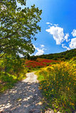 Landscape of a flowered hill  with Trees and sky Royalty Free Stock Images