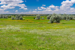 Landscape with flowering meadow near village Zeleny Guy on the Sura river in Ukraine Royalty Free Stock Photos