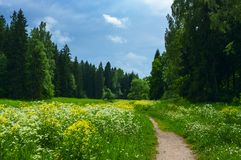 Landscape with a flowering meadow in the park Stock Images