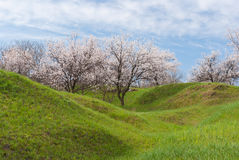 Landscape with flowering orchard Royalty Free Stock Images