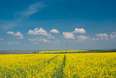 Landscape with flowering rape-seed field  in central Ukraine Stock Photos