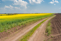 Landscape with flowering rape-seed field and earth road in central Ukraine Royalty Free Stock Images