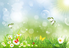 Landscape with flowers and butterflies. Landscape background with flowers and butterflies Royalty Free Stock Photos
