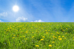 Landscape. Flowery meadow, the sky and the sun Royalty Free Stock Photo