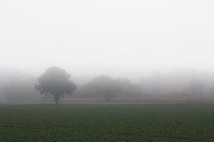 Landscape and fog. The picture shows a landscape and fog royalty free stock photo