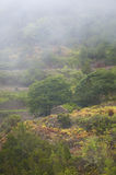 Landscape with fog in Gomera. Canary Islands. Spain Stock Images