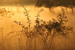 Landscape, Fog, Morning Sun Stock Images
