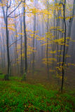 Landscape. With fog in the woods Stock Photography