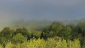 A carpathian landscape at the morning. A landscape of the foggy morning forest at carpathian mountains, national park Skolivski beskidy, Lviv region of Western stock video footage