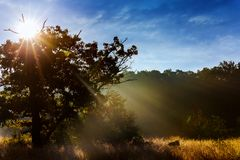 Landscape - Foggy morning in spring meadow. Sunrise in river valley. Royalty Free Stock Images