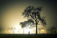 Landscape of foggy and mysterious park at night. Empty area. Royalty Free Stock Photo