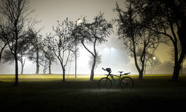 Landscape of foggy and mysterious park at night. Empty area. Stock Photos