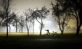 Landscape of foggy and mysterious park at night. Empty area. Royalty Free Stock Photography