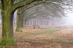 Landscape of foggy trees in forest Royalty Free Stock Images