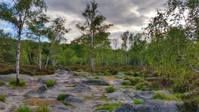 Landscape in Fontainebleau Forest Royalty Free Stock Image