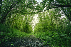 Landscape with footpath in the wood Royalty Free Stock Photos