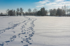 Landscape with footprints on a fresh snow Royalty Free Stock Images