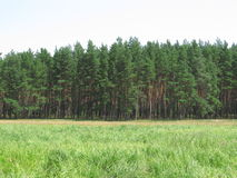 Landscape of forest. And green grass on the nature Stock Photo