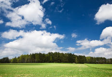 Landscape with forest Royalty Free Stock Photography