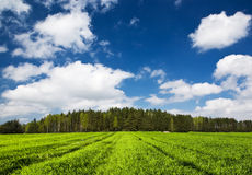 Landscape with forest Royalty Free Stock Images