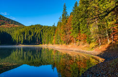 Landscape with forest around the mountain lake Stock Images