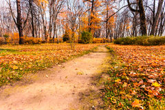 Landscape of the forest in autumn Royalty Free Stock Image
