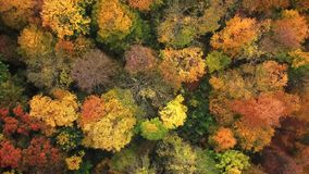 Landscape of a forest in beautiful fall colors reflected in the still waters of a calm river. Top view Aerial Drone 4k. Trees stock video footage