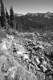 Landscape with forest in Bristish Columbia. Mount Revelstoke. Ca Royalty Free Stock Photography