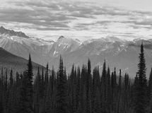 Landscape with forest in British Columbia. Mount Revelstoke. Can Stock Image