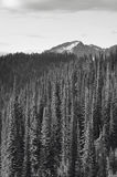 Landscape with forest in British Columbia. Mount Revelstoke. Can Royalty Free Stock Photos