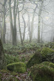 Landscape of forest with dense fog in Autumn Fall Stock Photo