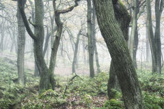 Landscape of forest with dense fog in Autumn Fall Royalty Free Stock Photos