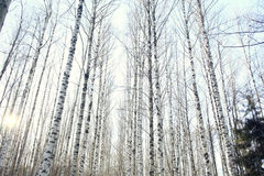 Landscape in a forest Stock Photography