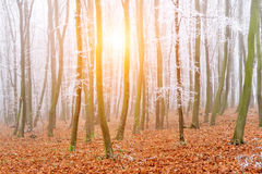 Landscape of a forest with fog Royalty Free Stock Photography