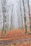Landscape of a forest with fog Stock Image
