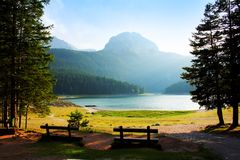 Landscape with forest and lake Royalty Free Stock Image