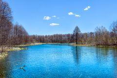 Landscape of the forest lake with blue colored water royalty free stock images