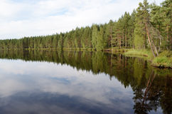 Landscape of the forest lake in summer Stock Image