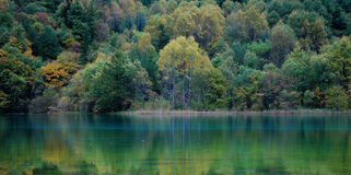 Landscape of forest and lake Royalty Free Stock Photo