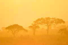 Landscape of a forest in morning mist. Landscape of a forest in orange morning mist Stock Photography