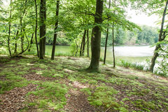 The landscape in the forest Royalty Free Stock Photos