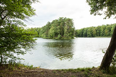 The landscape in the forest Stock Photography